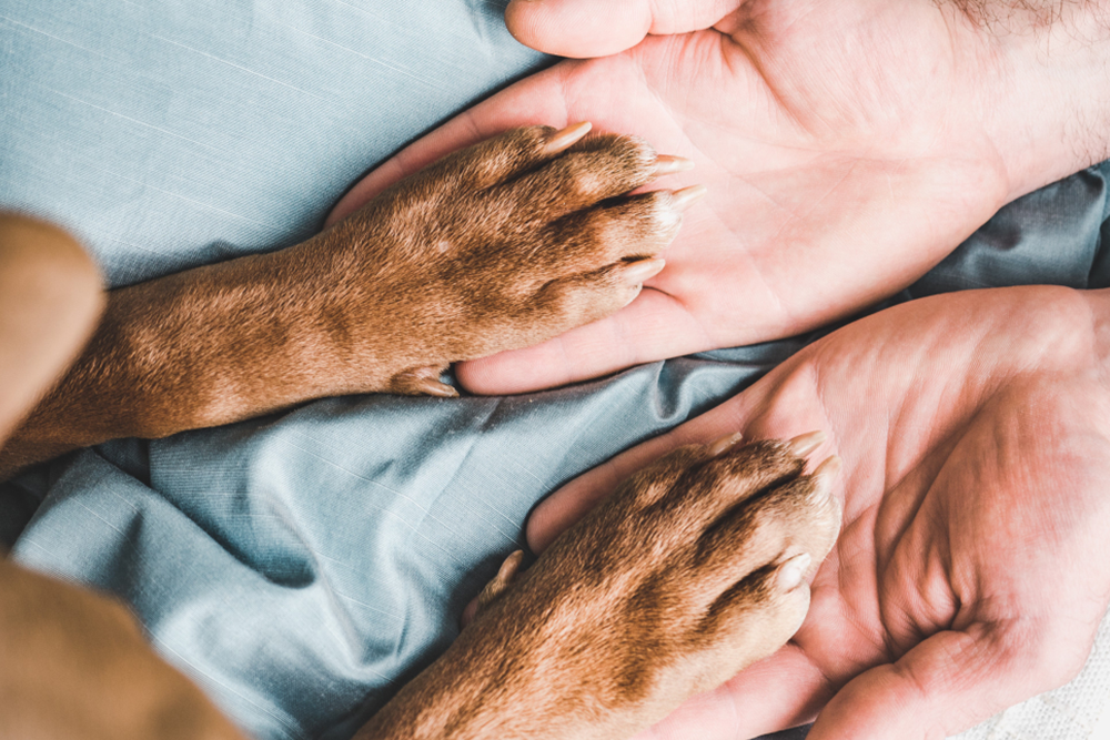 Holistic Medicine and Your Pets, image of man holding his dogs paws