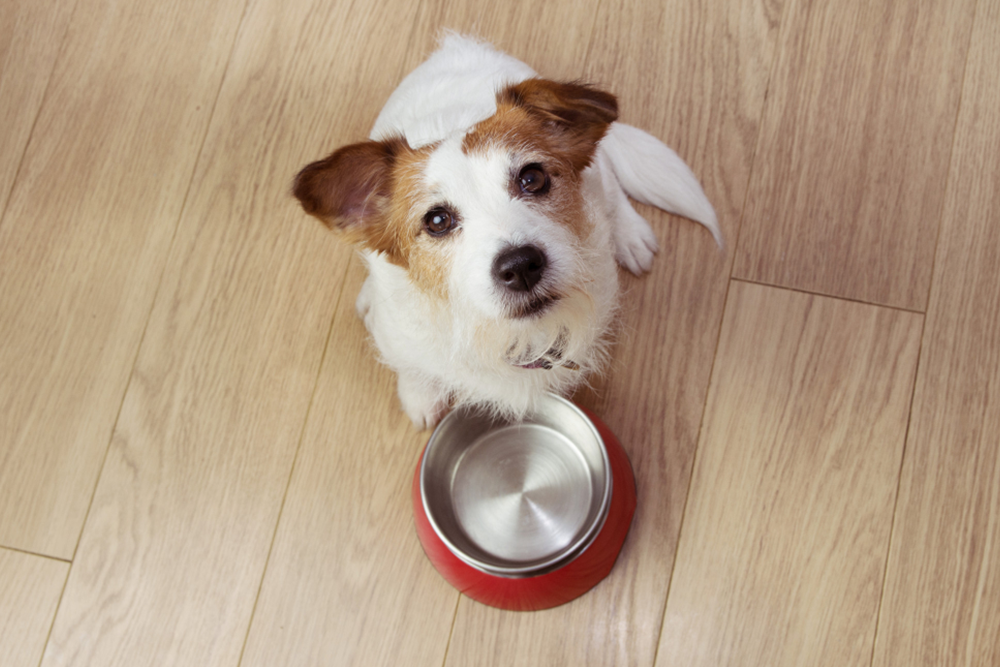 The-Grain-Free-Food-Debate---Good,-Bad-or-Indifferent, image of a dog in front of his bowl